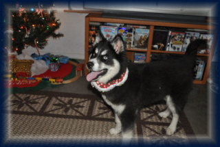 Jetta first Christmas 2009